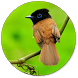 bird wallpapers by Recci