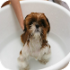 Dog Grooming Tips And Tricks by Creativity Knowledge App
