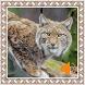 Lynx Sounds by Godev Houz