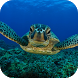 Sea Turtle Live Wallpaper FREE by Magic Ripples