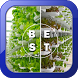 Hydroponic Plants Best Ideas