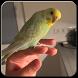 Tutorial Melatih Burung Peliharaan