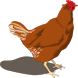 Poultry Manager 2.0 by Samuel T. Mbugua