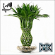 Виды комнатных растений by МобКиоск1