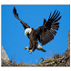 Eagle Live Wallpaper by SoftFree2015
