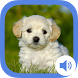 My Animal Flashcards for kids by MediaWoom Co. Ltd.