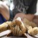 Cat Massage Videos