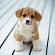 Cute Little Puppies Wallpapers by S.S.P
