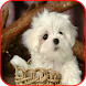 Cute Puppy Images by simratapps