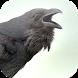 Suara Burung Gagak by Mhmapp Studio