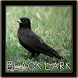 Black Lark Bird Sounds by penodev