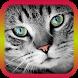 Translator for Cats - Cat Translator by USV