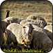 Sheep Wallpapers by HAnna