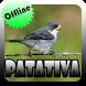 Canto de Patativa Offline by Topek App