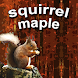 squirrel maple by win2playTeam