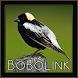 Bobolink Bird Chirping Sounds by penodev