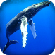 Blue Whale Mission Bomb Plant by GR Mobile Games