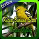 Kicau Burung Sirtu Merdu Offline by ayuki apps