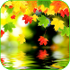 Autumn 4K Live Wallpaper by Tanguyerfo