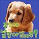 주인아! 날 찾아달라멍!( 유기견, 강아지, 개 찾기) by LffWan