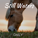 Still Waters Daily by Back to the Bible