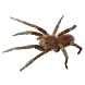 Spider Tarantula Sticker by Orcraphics