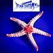 Fathoms Aquatics by BWAR!