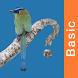 Panama Birds Field Guide Basic by Ryan Mullin