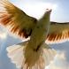 flying birds live wallpaper by best wallpaper inc