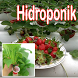 hydroponic plants by seemala