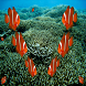 Find Clown Fish by AdeSoftware