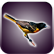 Birds Sounds and Wallpapers by Inflame Apps Studio