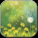 Dandelions field by inosoftmedia