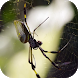 Exotic spider video wallpaper by AlexAlerion
