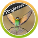 Birds Ringtones Free 2018 by Luis Mart Apps