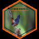 Kumpulan Suara Burung Kicau Offline by agastudio