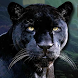Real Black Panther Simulator by Game Time Studio