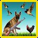Dog vs Birds