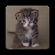 Cute Kittens Wallpaper HD by Laylali