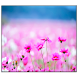 Flower Live Wallpaper by SoftFree2015