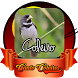 Canto Coleiro 2017 by Ikhlas Apps