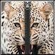 zipper lock screens Glitter by Topapp 2016