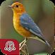 Chirping Master Anis Merah by Masteran Kicau Burung Lengkap