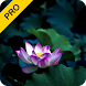 Meditative Harmony Pack (PRO) by Daily Yoga Software Technology Co. Ltd