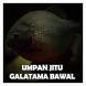 Umpan Jitu Galatama Bawal by Hampala Kingdom