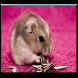 Hamster Live Wallpaper
