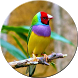 HD Birds Wallpapers by lanix soft