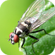 Insect Wallpapers by Leafgreen