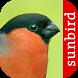 Vogel Id - Vögel im Garten by Sunbird Images