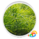 Grass Real Live Wallpaper by Byte Mobile